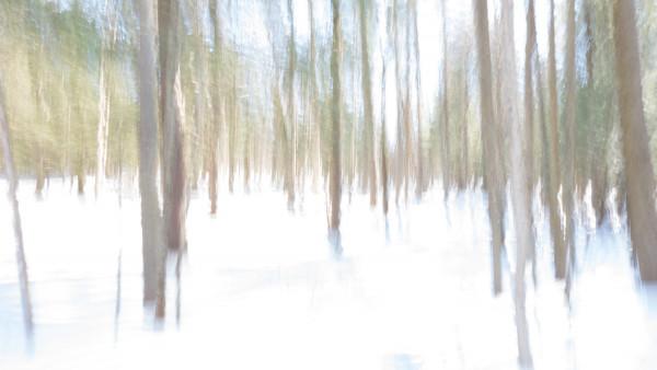 Rêve hivernal
