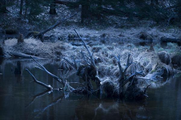 La Souche / Collection Forêt Profonde