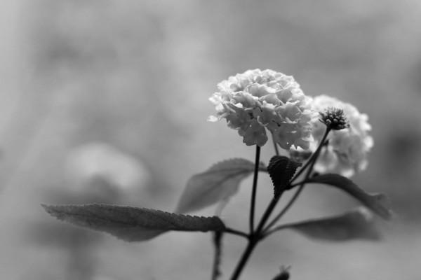 Fleurs à Besançon I