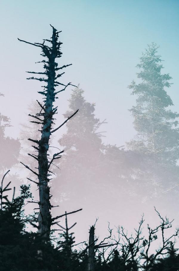 La forêt maritime #6
