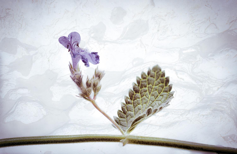 Fleurs Sauvages 1