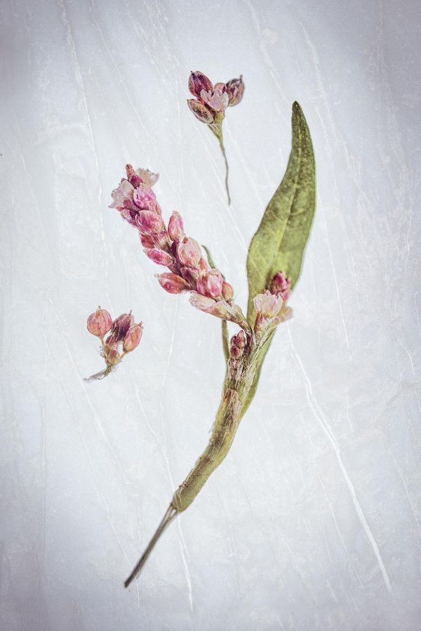 Fleurs Sauvages 3