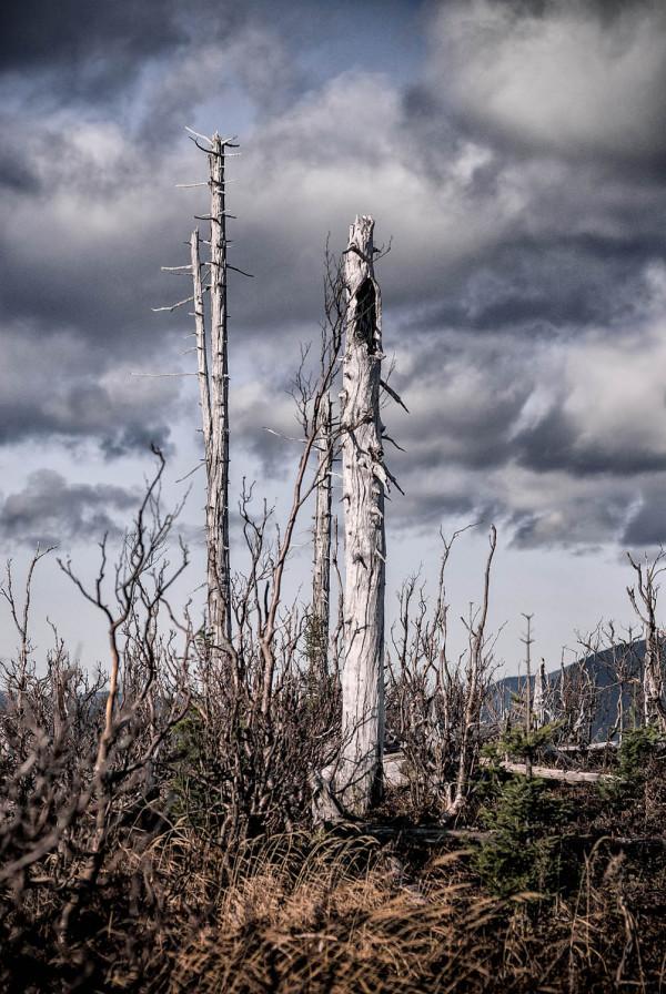 La forêt perdue